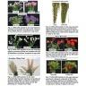Bột cắm hoa tươi lâu Israel, hiệu Longlife (combo 100 gói nhỏ), giúp tươi lâu gấp 2 lần và 14 ngày không thay nước