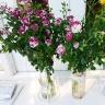 Bột dưỡng hoa tươi lâu hiệu Longlife của Israel (combo 50 gói) giúp hoa tươi lâu gấp 2 lần, 14 ngày không thay nước