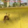 Keo dính côn trùng vàng 2 mặt Isreal trong nông nghiệp (cuộn 100 mét)