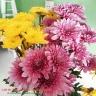 Dung dich xử lý hoa TOG Galileo của Israel (chai 1 Lít) dành cho nhà vườn trồng hoa, vựa hoa, chợ sỉ hoa