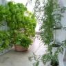 Chậu trồng rau đứng ban công Minigarden Vertical (combo 8 bộ là 1m2) có bộ tự tưới nhỏ giọt
