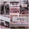 (Giá độc quyền) Bộ ga gối 4 món cotton satin Hàn Julia 484BK16