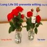 Bột dưỡng hoa hồng lâu tàn Longlife Israel (Set 100 gói tiết kiệm) giúp hoa hồng luôn tươi mới, cánh hoa cứng cáp hơn