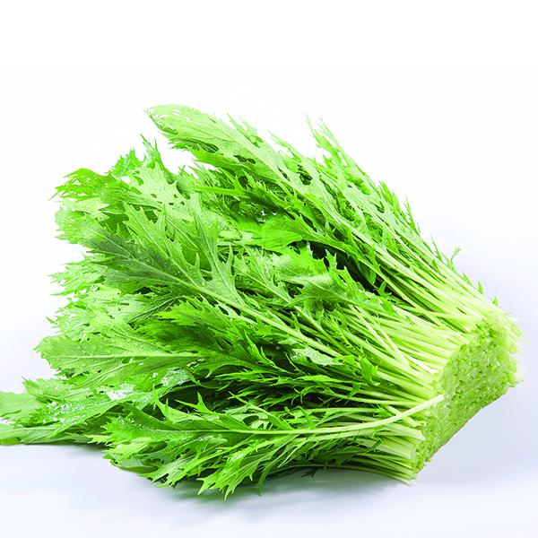 Cải Mizuna Nhật Hữu Cơ (Organic Mizuna)