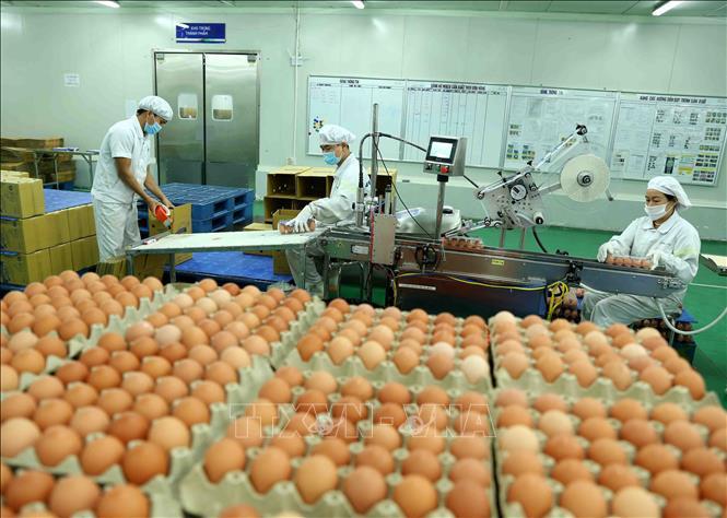 Trứng gà sạch DTK