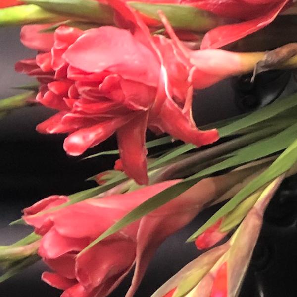 Hoa và giống hoa đa lộc