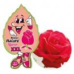 Lá thơm nụ cười may mắn lớn L&D XXL Mister Nature Rose