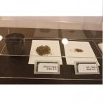 Máy bắt muỗi và diệt côn trùng Mosclean Hàn Quốc MQ-HN