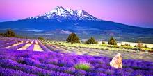 Du lịch Nhật Bản 4 ngày 3 đêm dịp hè 2017 ngắm hoa Lavender