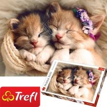 Tranh ghép hình TREFL 37271 - 500 mảnh những chú mèo ngủ ngon (jigsaw puzzle tranh ghép hình chính hãng TREFL)