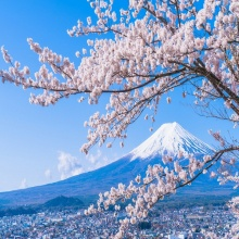 Tour du lịch Nhật Bản mùa hoa anh đào 2019: Tokyo – Hakone – Fuji.mt- Yamanashi - Tokyo 4 ngày 3 đêm bay VN