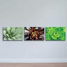 Bộ 3 tranh treo tường hoa sen đất W507