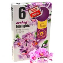 Hộp 6 nến thơm tinh dầu Tealight Admit Orchid QT026069 - lan hồ điệp