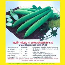 Hạt giống mướp hương F1 LONG GREEN 620 5GR