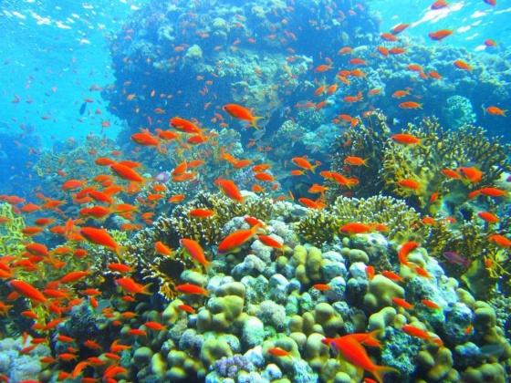Tour Nha Trang - Khám phá thiên đường của biển 3 ngày 3 đêm chỉ 1.190.000 VNĐ