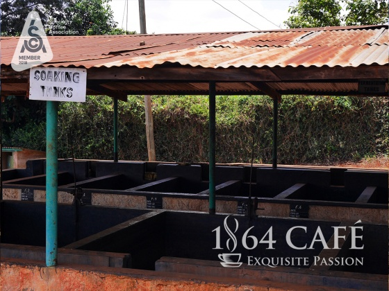 220g specialty coffee rukera kenya nguyên hạt-exquisiste 1864 CAFÉ®