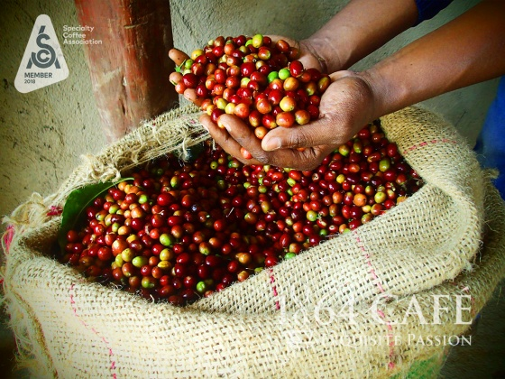 220g Specialty coffee Yirgacheffe Ethiopia nguyên hạt - exquisite 1864 CAFÉ®