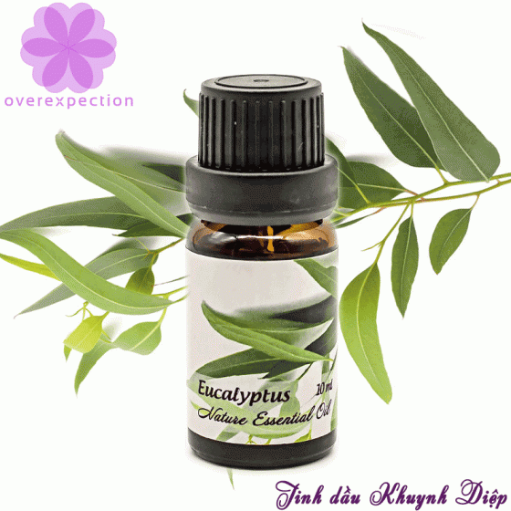 Tinh dầu khuynh diệp Eucalyptus Essential Oil