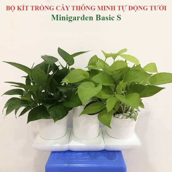 Bộ chậu trồng cây tự động tưới thông minh Minigarden Basic Uno, phong cách Châu Âu