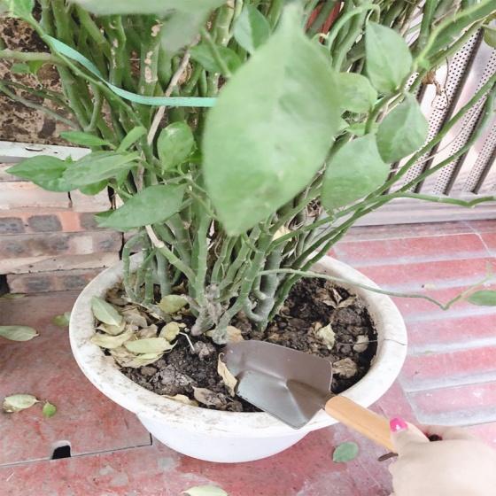 Xẻng làm vườn mini Echo nhập khẩu nhật bản bền đẹp
