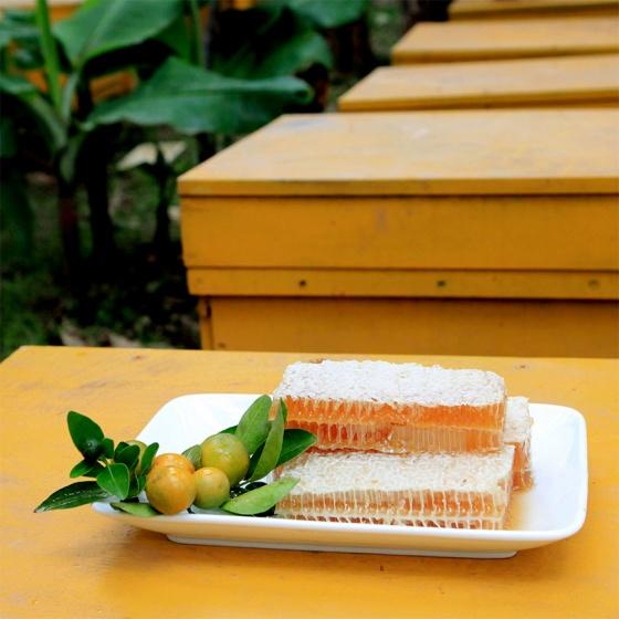 Mật ong quất Tam Đảo 600g